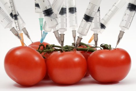 Syringe needles pushed into tomatoes