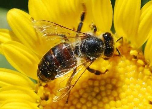 Leaked EPA Memos May Explain Massive Bee Die-Off | Center for ...