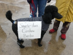 "Poodle is smarter than ""Caribou Barbie"""