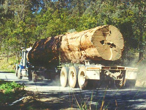 Tasmanian logging (Photo: The Wilderness Society)