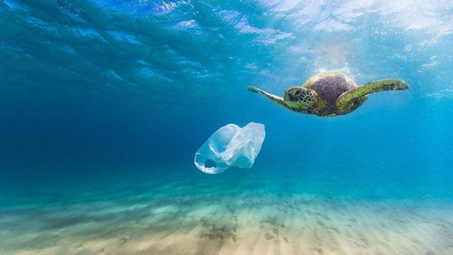 Sea turtle and plastic bag